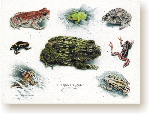 th_frogs_toads.jpg (77008 bytes)