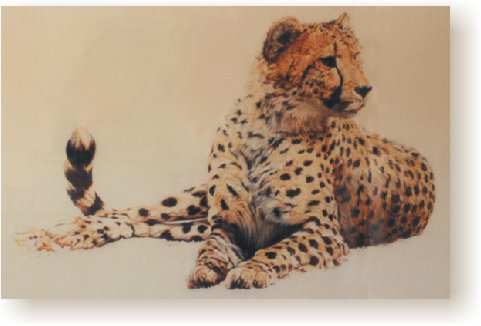Lying Cheetah II
