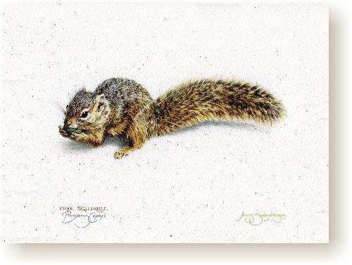 Tree Squirrel III