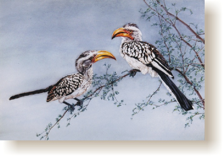 th_yellow_billed_hornbills.jpg (110048 bytes)